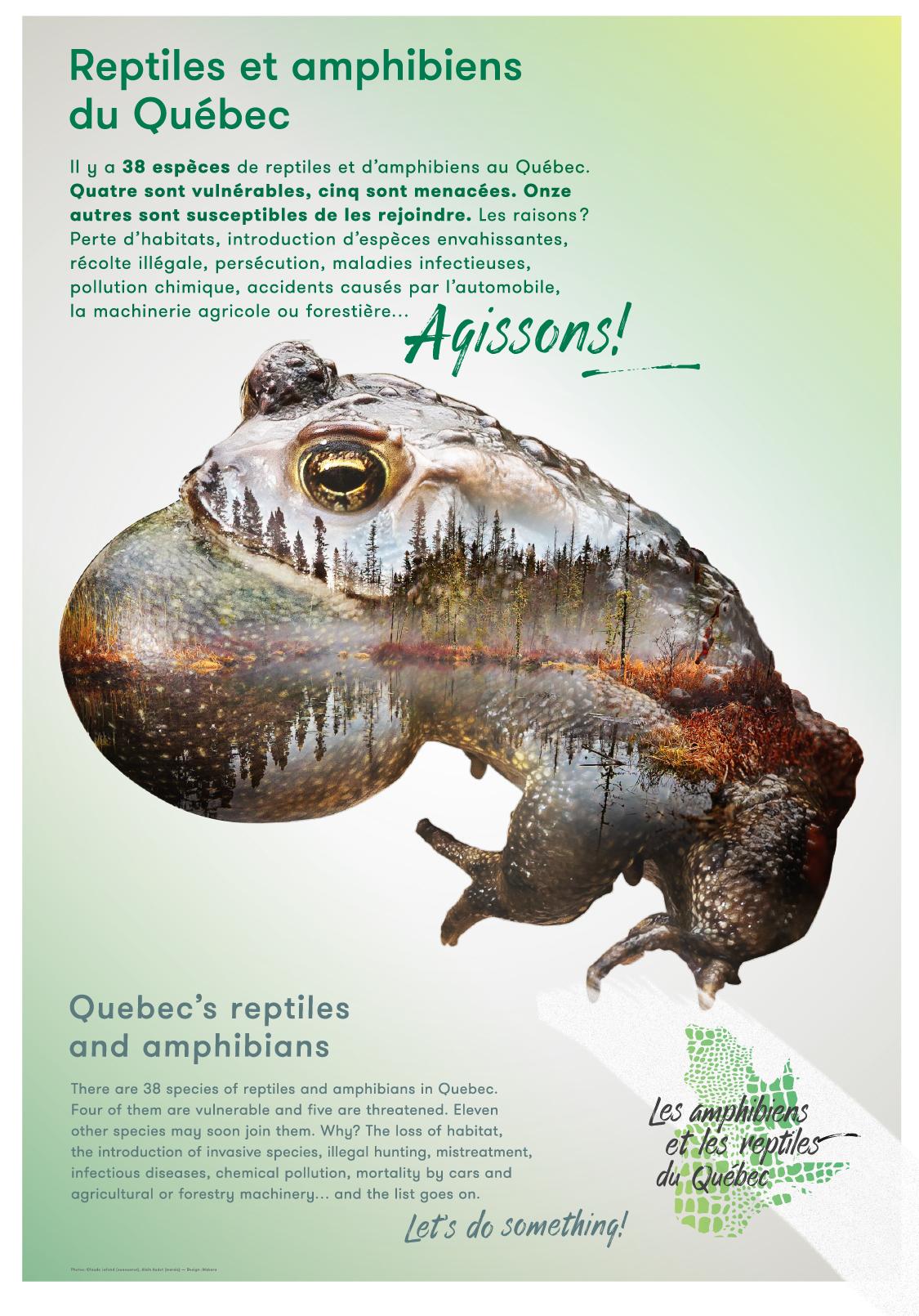Amphibiens-1-Makara