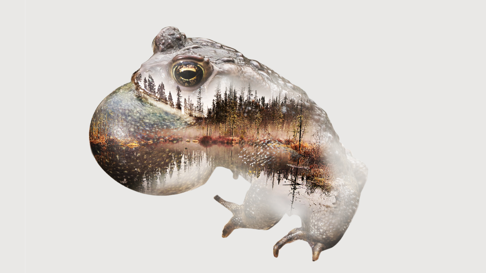 Exposition Les reptiles et les amphibiens du Québec. Biodôme de Montréal