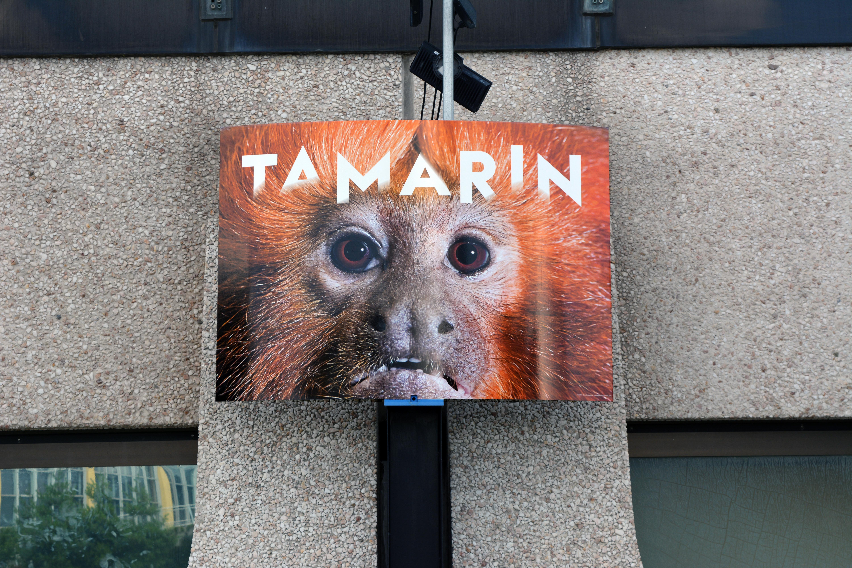 Tamarin-makara