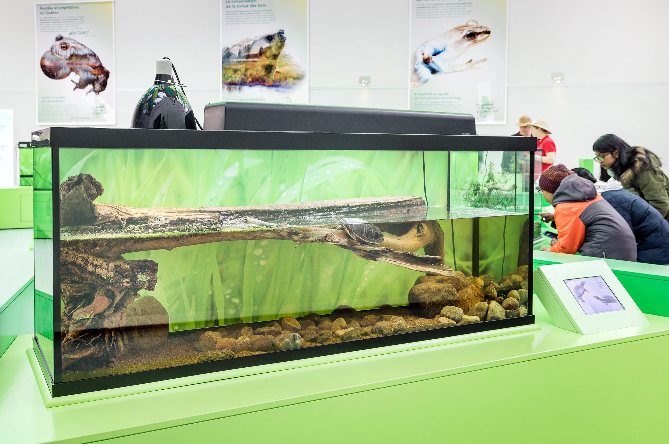 Vue-Expo-Amphibiens2