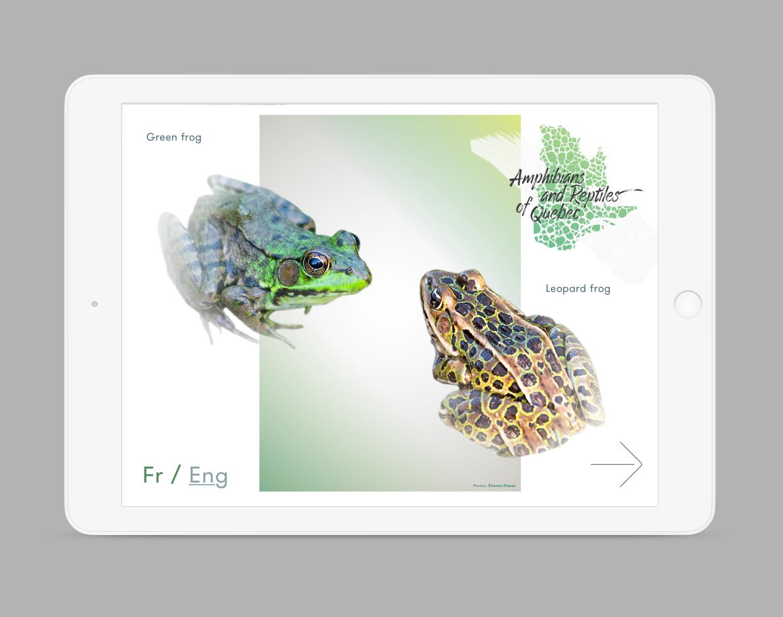 iPad-Amphibiens-01