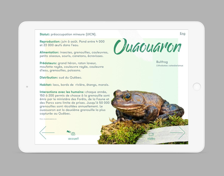 iPad-Amphibiens4